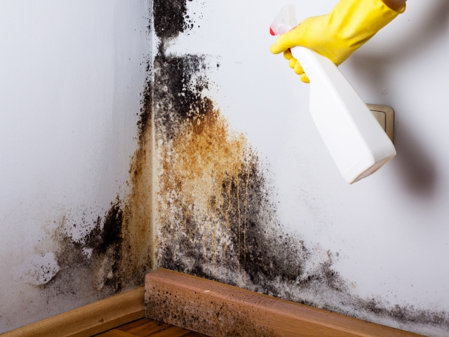 Signs That Mold May Be Growing In Your Home