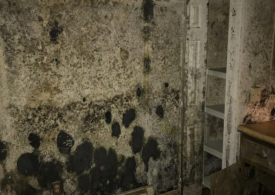 Black mold basement
