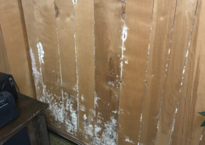 Mold on paneling